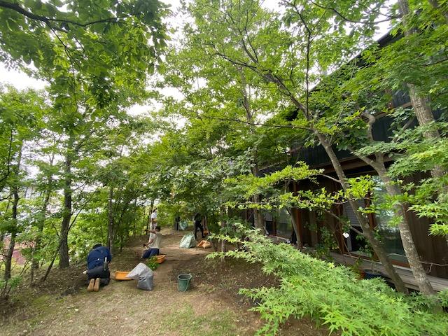 葉山の強い海風にも負けずに大きく枝を伸ばして成長したコナラやケヤキに紅葉の落葉樹たち