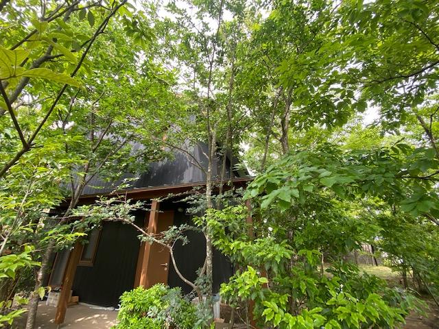 まるで避暑地に来たかのような涼しい庭 建物の全景も見えないほど夏は枝葉が生い茂る