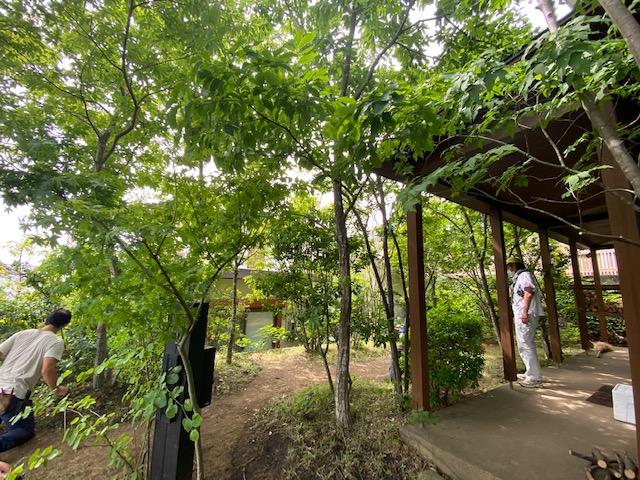 様々な樹種が育つ雑木の庭は手入れも楽しい